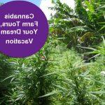 Aubervilliers: Acheter CBD huile avec fleurs et résine en ligne Skunk !