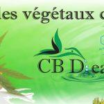 Le Puy-en-Velay: Acheter CBD huile avec fleurs et cristaux en ligne Big Bud !