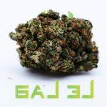 Pontarlier: Achat CBD liquide ainsi que fleurs et cristaux Légal Big Bud !